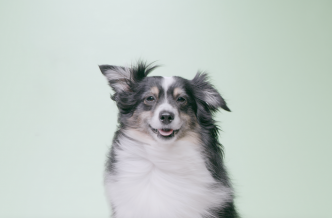 Image of Ruff Greens Dog Looking at Camera