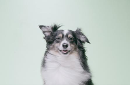 Image of Ruff Greens Dog Looking at Camera